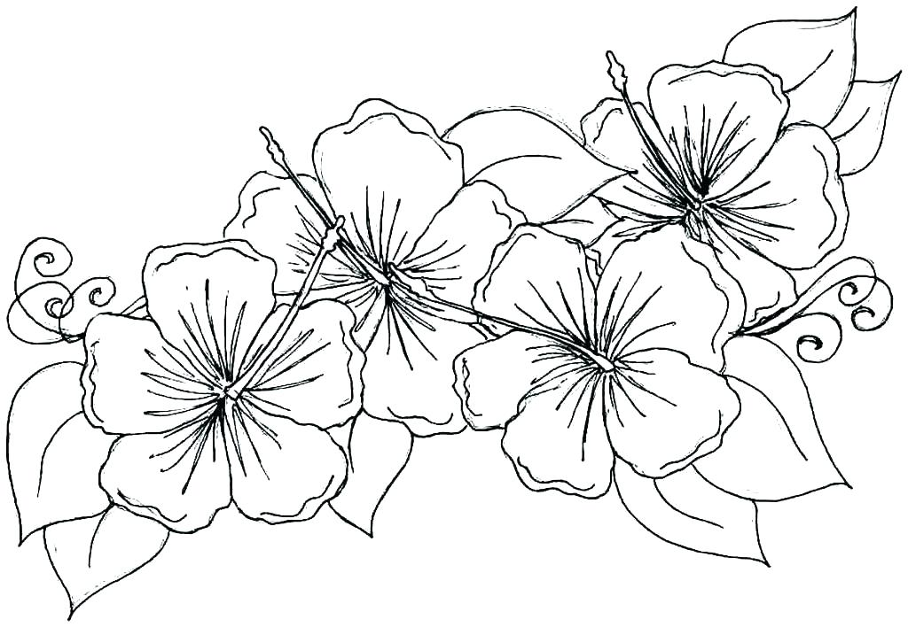 1024x708 Spring Flower Coloring Pages