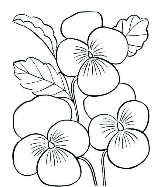 530x613 Cute Flower Coloring Pages Coloring Spring Flowers Flowers