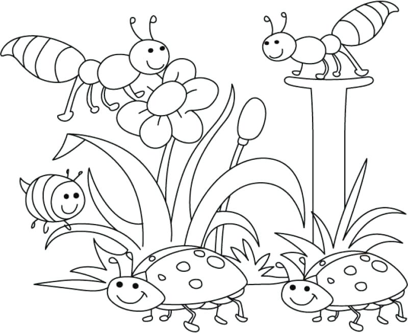 800x654 Free Spring Coloring Pages For Adults Sheets Printable Springtime