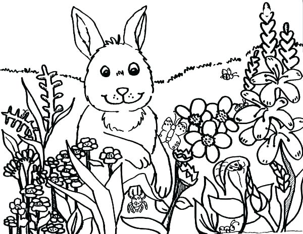 600x464 Astonishing Spring Coloring Pages Printable