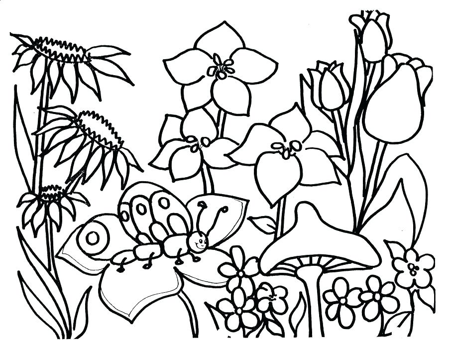 906x683 Spring Pictures Coloring Pages Adult Coloring Pages For Seniors