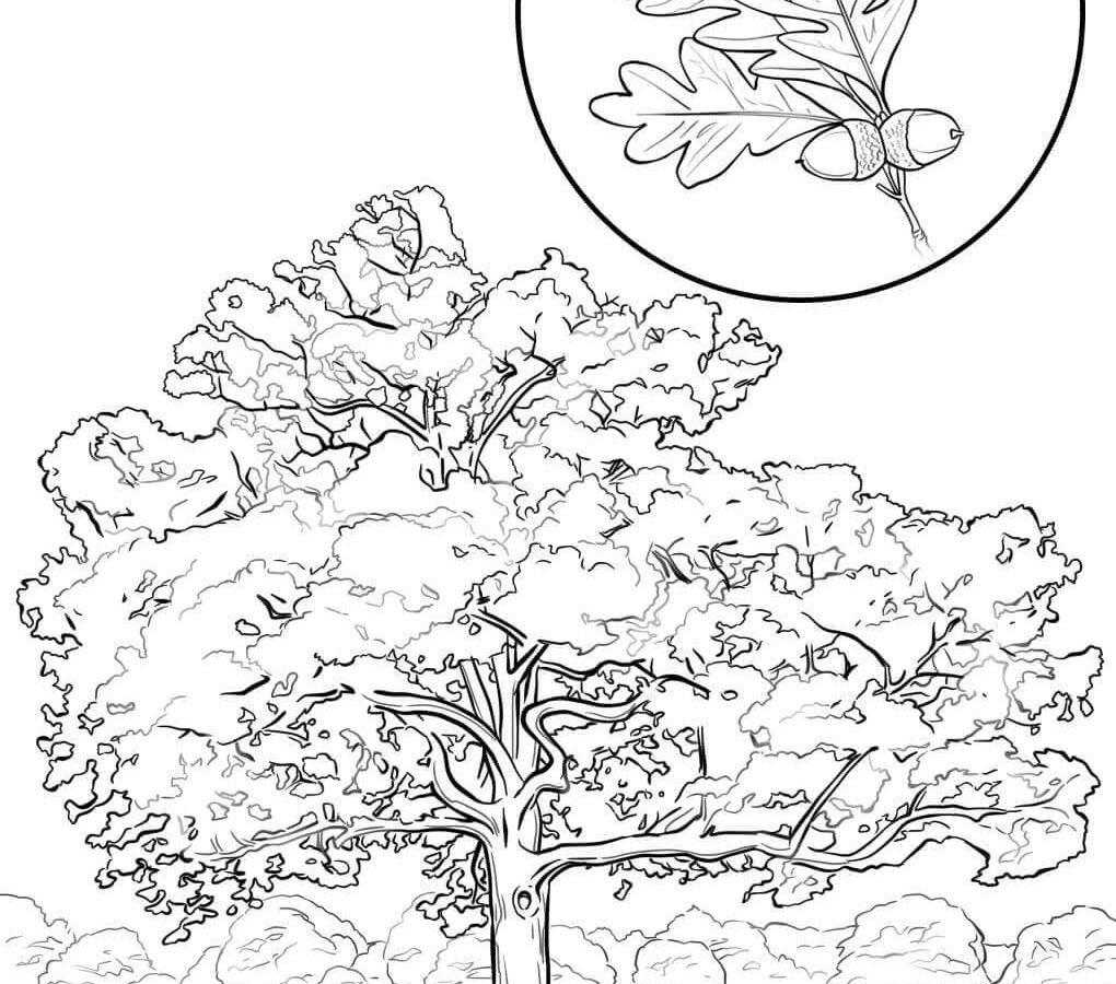 1020x900 Apple Tree Coloring Page Free Printable Pages Kids Frog Leaves