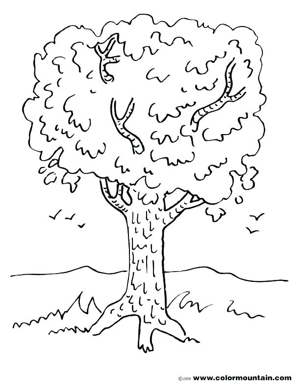 618x788 Tree Color Page Coloring Pages Of Trees And Spring Tree Coloring