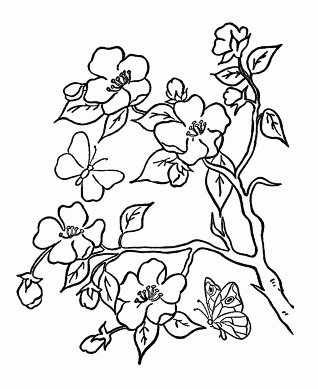 1024x1254 Awesome Spring Flower Coloring Pages Design Printable Coloring Sheet