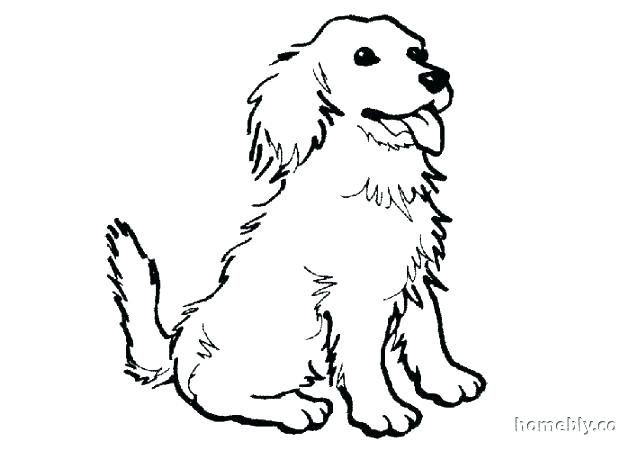 630x450 Spaniel Coloring Pages Spaniel Coloring Page Spaniel Coloring
