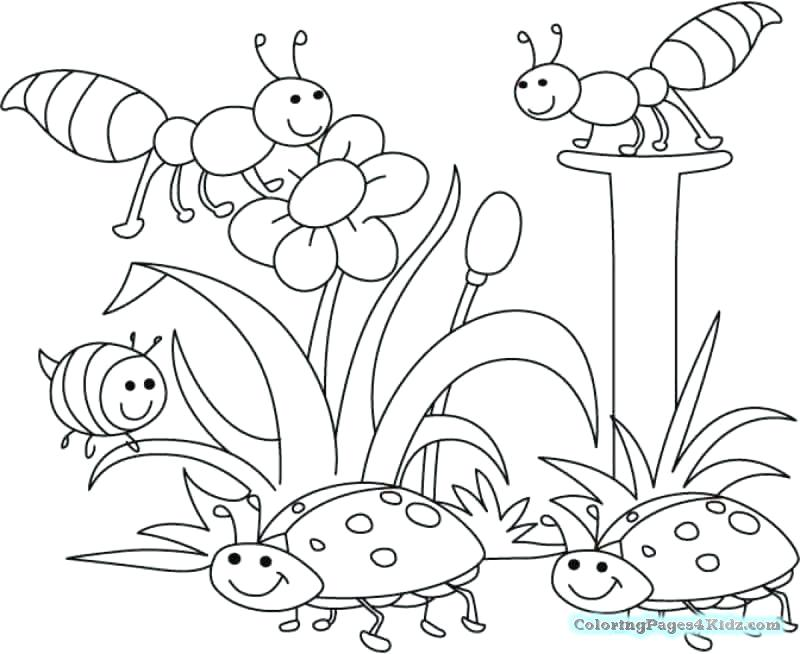 800x654 Free Cute Spring Coloring Pages Baby Chick For Kids Fuhrer Von