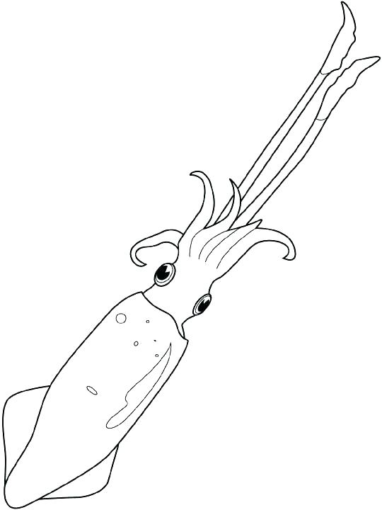 540x720 Squid Coloring Page Giant Squid Coloring Page Giant Squid Coloring