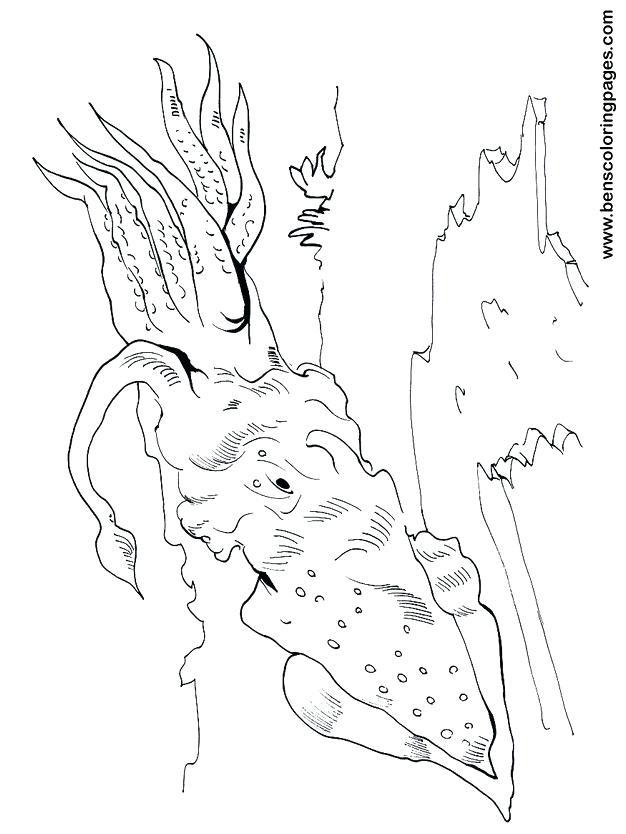 626x834 Squid Coloring Page Squid Coloring Pages Minecraft Squid Coloring