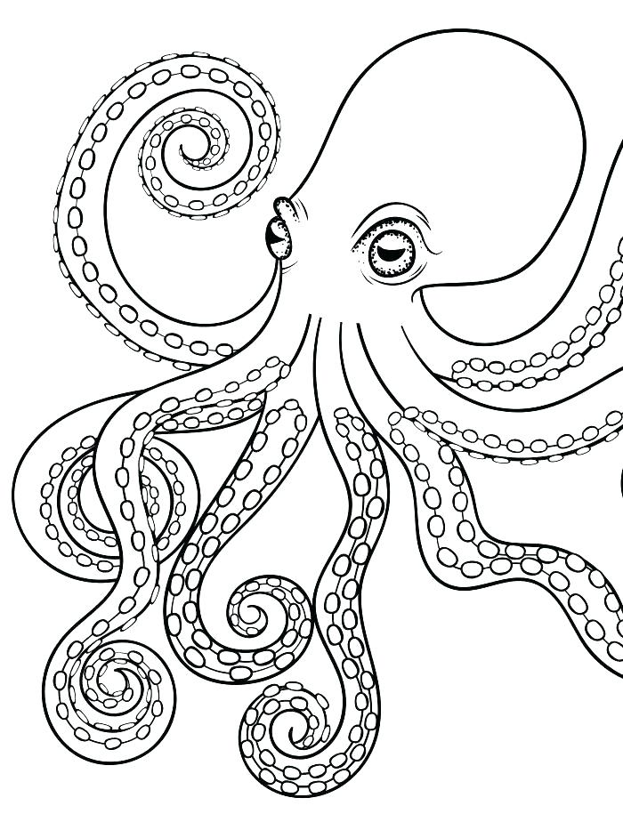 700x924 Squid Coloring Pages Octopus Ocean Coloring Page Squid Coloring