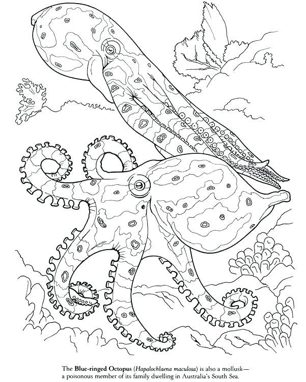 601x750 Squid Coloring Pages Squid Coloring Pages Drawn Squid Invertebrate