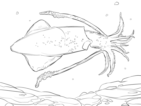 480x360 Giant Squid Coloring Pages Squid Coloring Pages Free Coloring