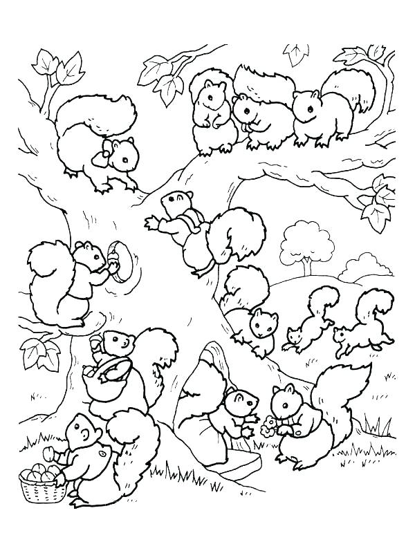 600x800 Squirrel Coloring Page Free Printable Coloring Pages Squirrel