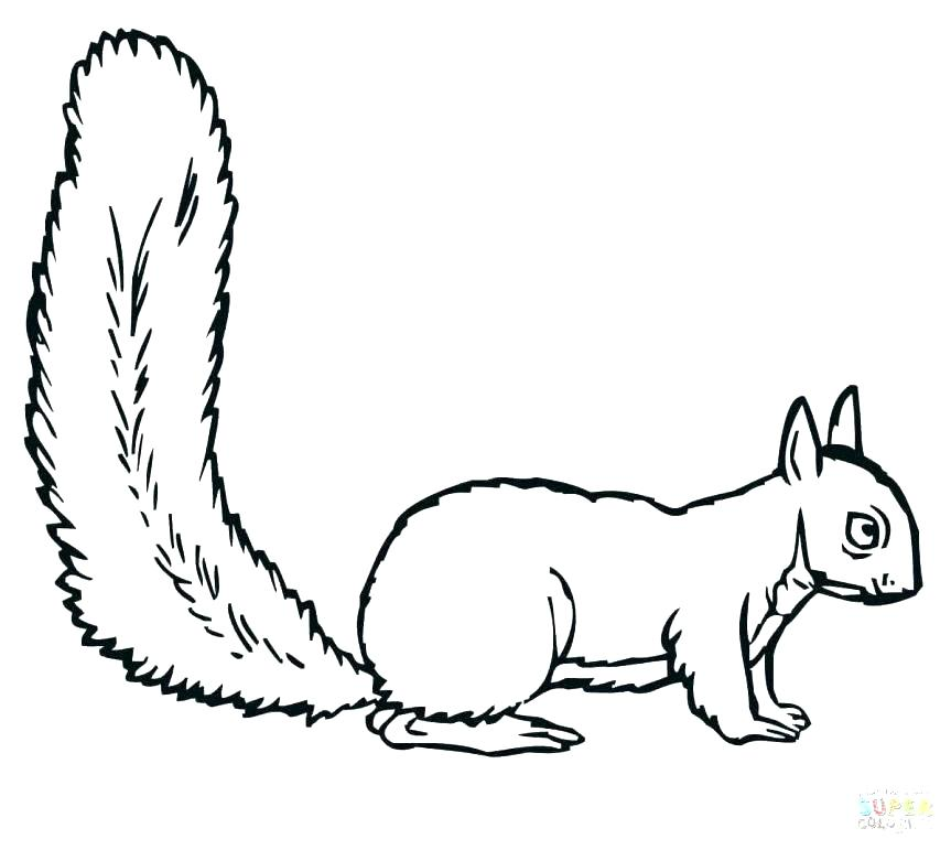 863x771 Squirrel Coloring Page Squirrel Coloring Page Squirrels Pages Free