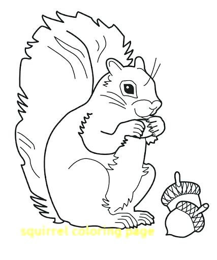 427x512 Squirrel Coloring Page Stunning Squirrel Coloring Page Image