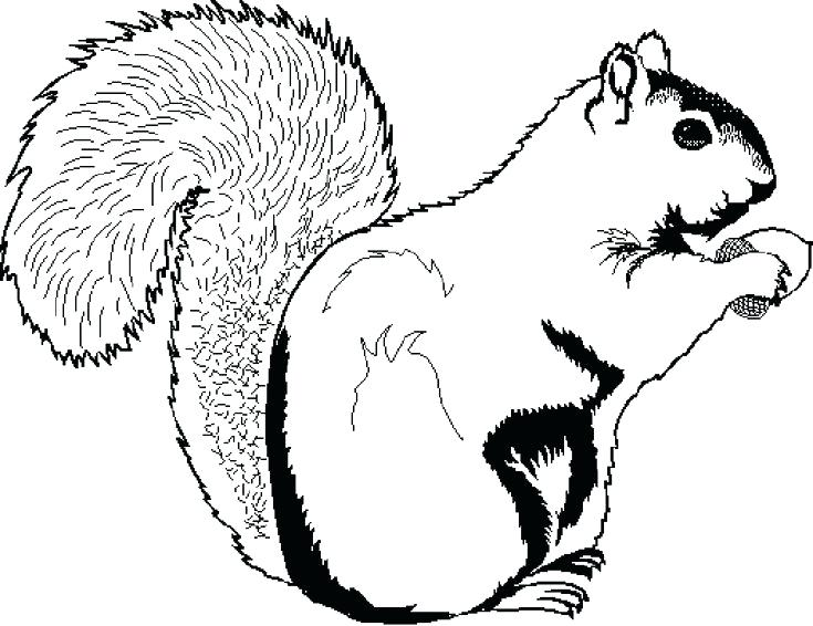 735x566 Squirrel Coloring Page Printable Coloring Pages Squirrel Ques Free