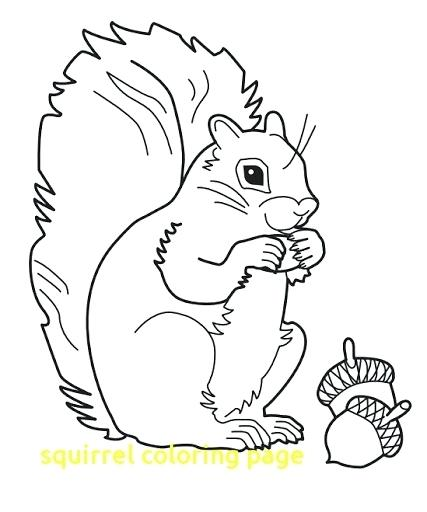 Squirrel Coloring Pages Printable at GetDrawings.com | Free for ...