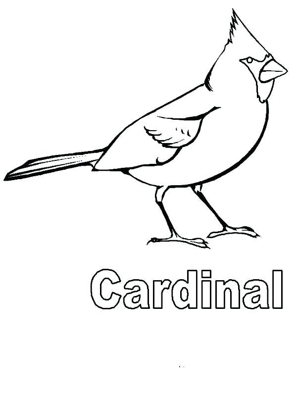 600x800 St Louis Cardinals Coloring Pages