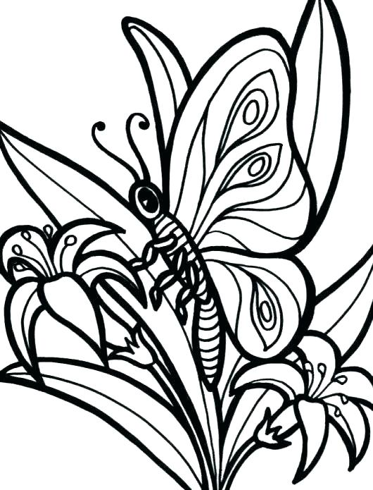 530x695 Coloring Pattern Pages Stained Glass Coloring Printable Adult