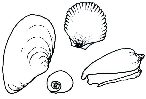 618x421 Seashell Coloring Pages Astounding Sea Shell Coloring Pages Star