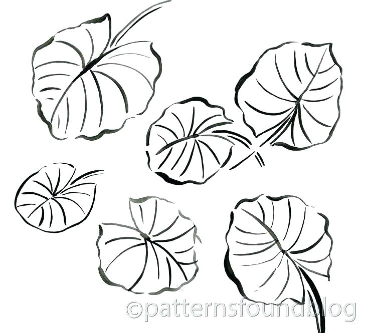 The Best Free Lily Coloring Page Images Download From 420 Free