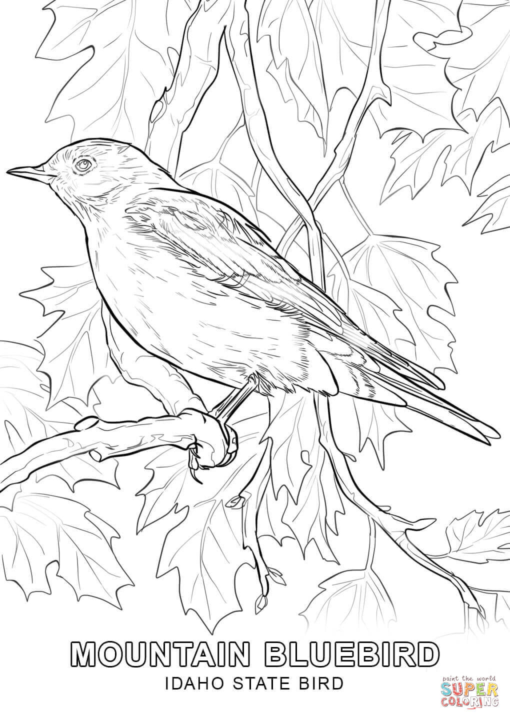 1020x1440 Idaho State Bird Coloring Page