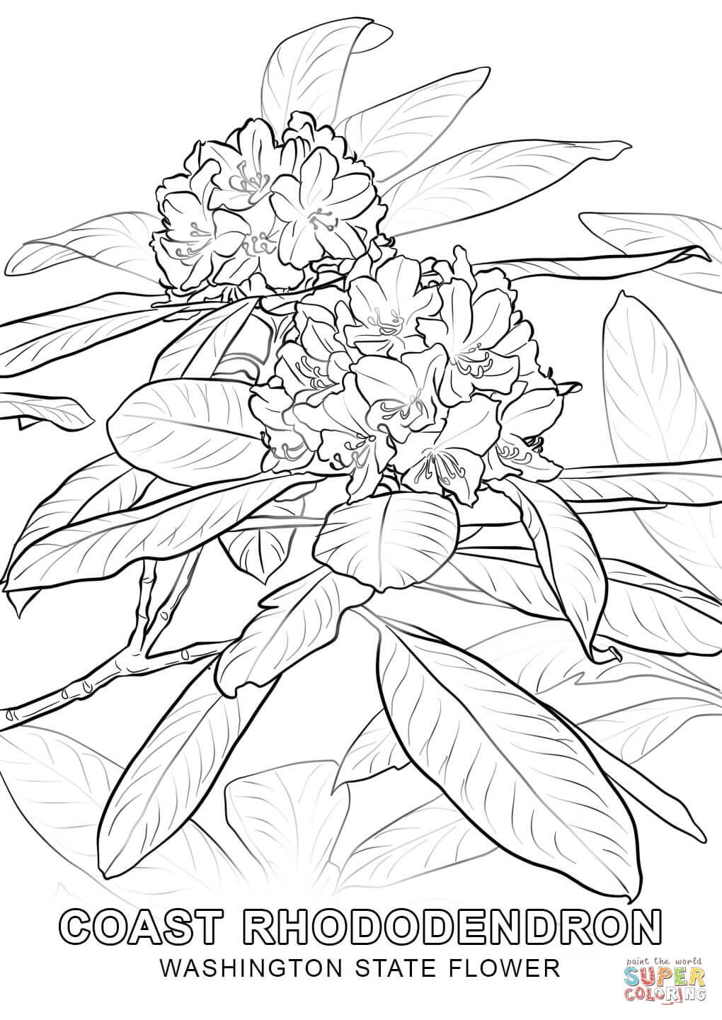 1020x1440 State Flower Coloring Pages