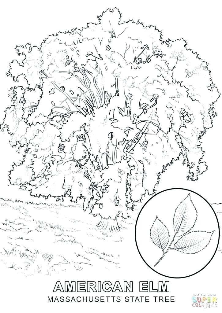 725x1024 State Tree Coloring Page Free Printable Coloring Pages State Tree