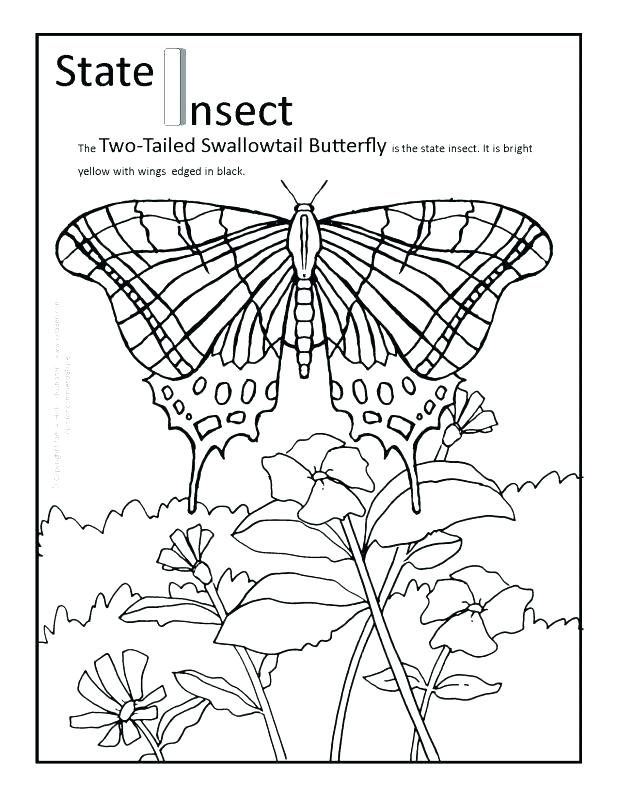 618x800 Arizona State Bird Coloring Page State Coloring Pages State