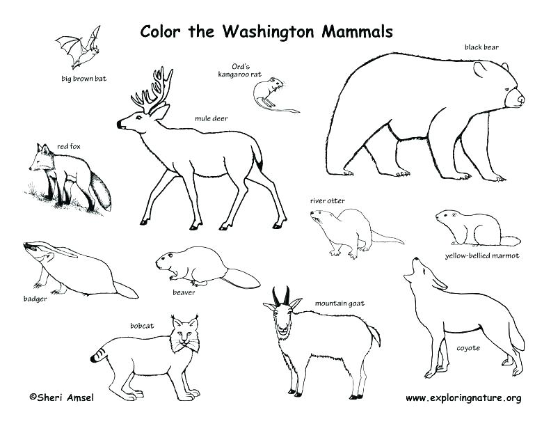 792x612 Alabama State Bird Coloring Page Vanda