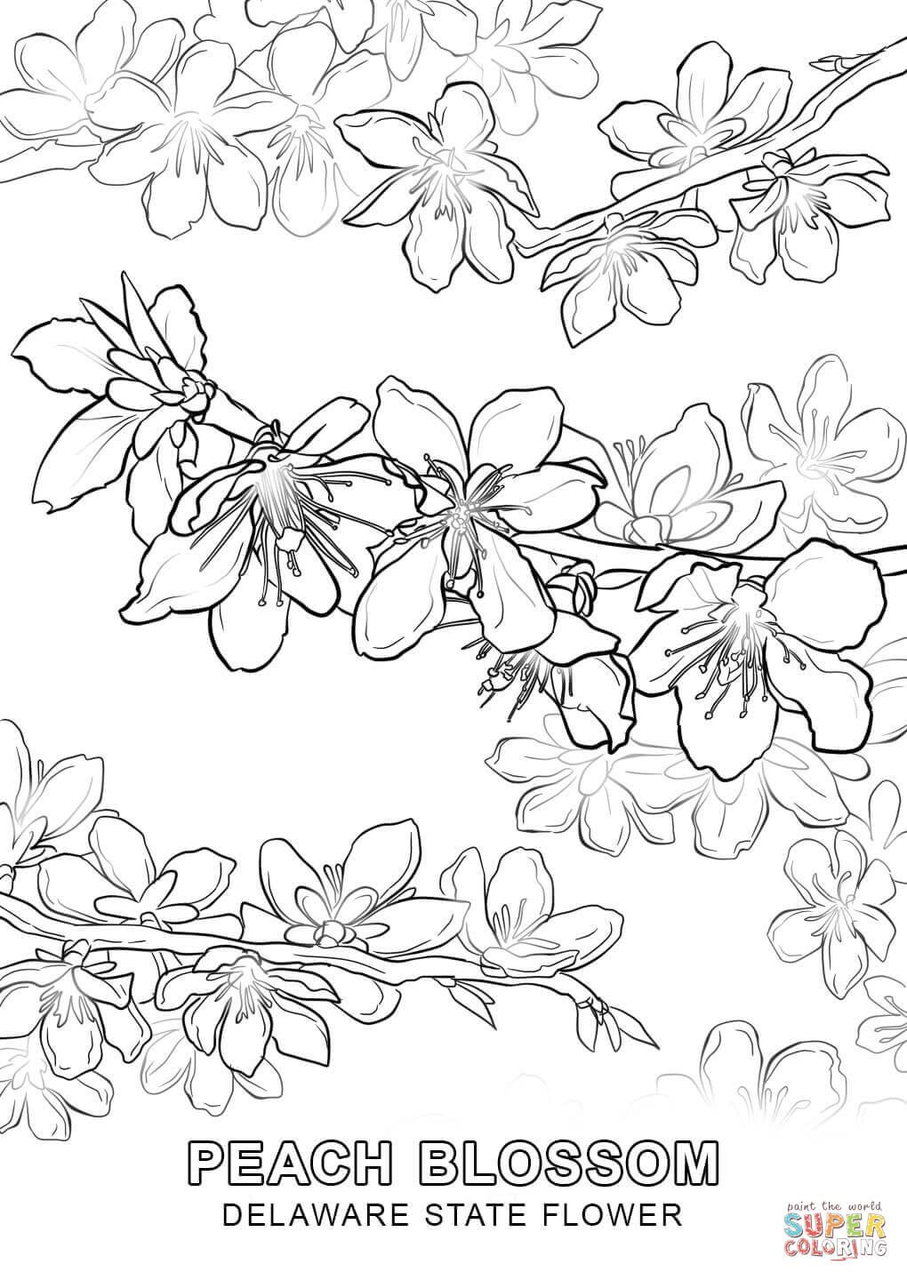 1020x1440 Click The Delaware State Flower Coloring Pages To View Printable