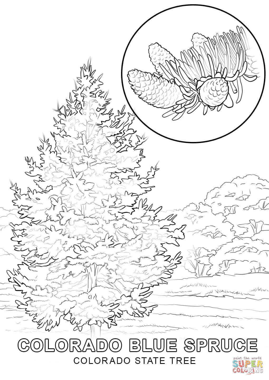 1020x1440 Colorado State Coloring Pages States Tree Page