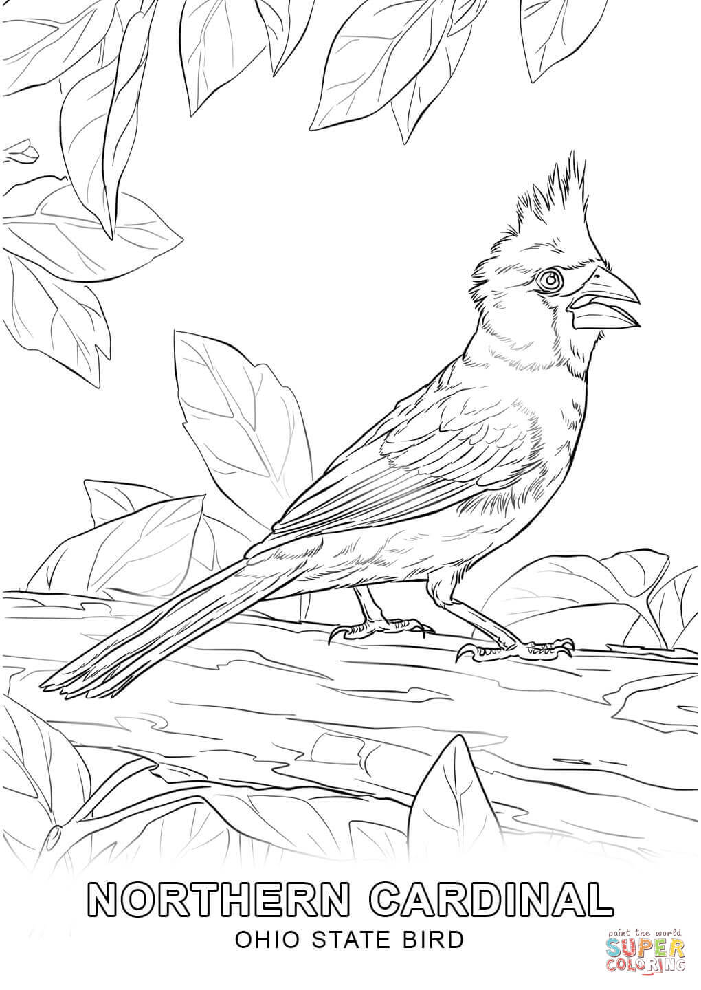 1020x1440 Coloring Pages Countries Cultures Ohio State Bird Divacoronas Com