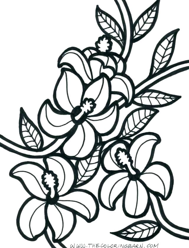 640x838 Flowers Coloring Pages Perfect Hibiscus Flower Coloring Flowers