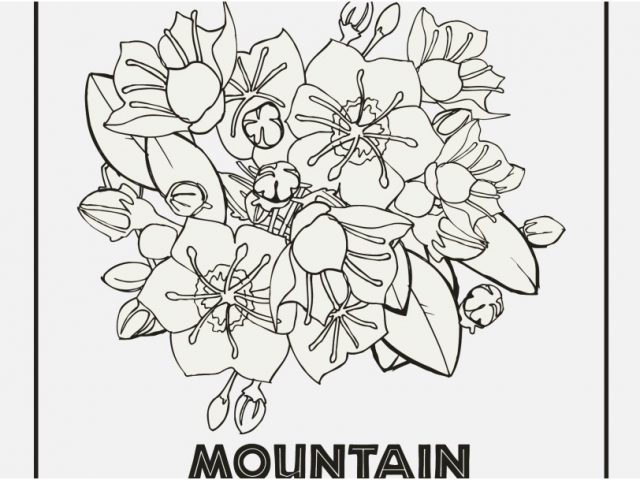 640x480 State Coloring Pages Graphic Pennsylvania State Flower Coloring