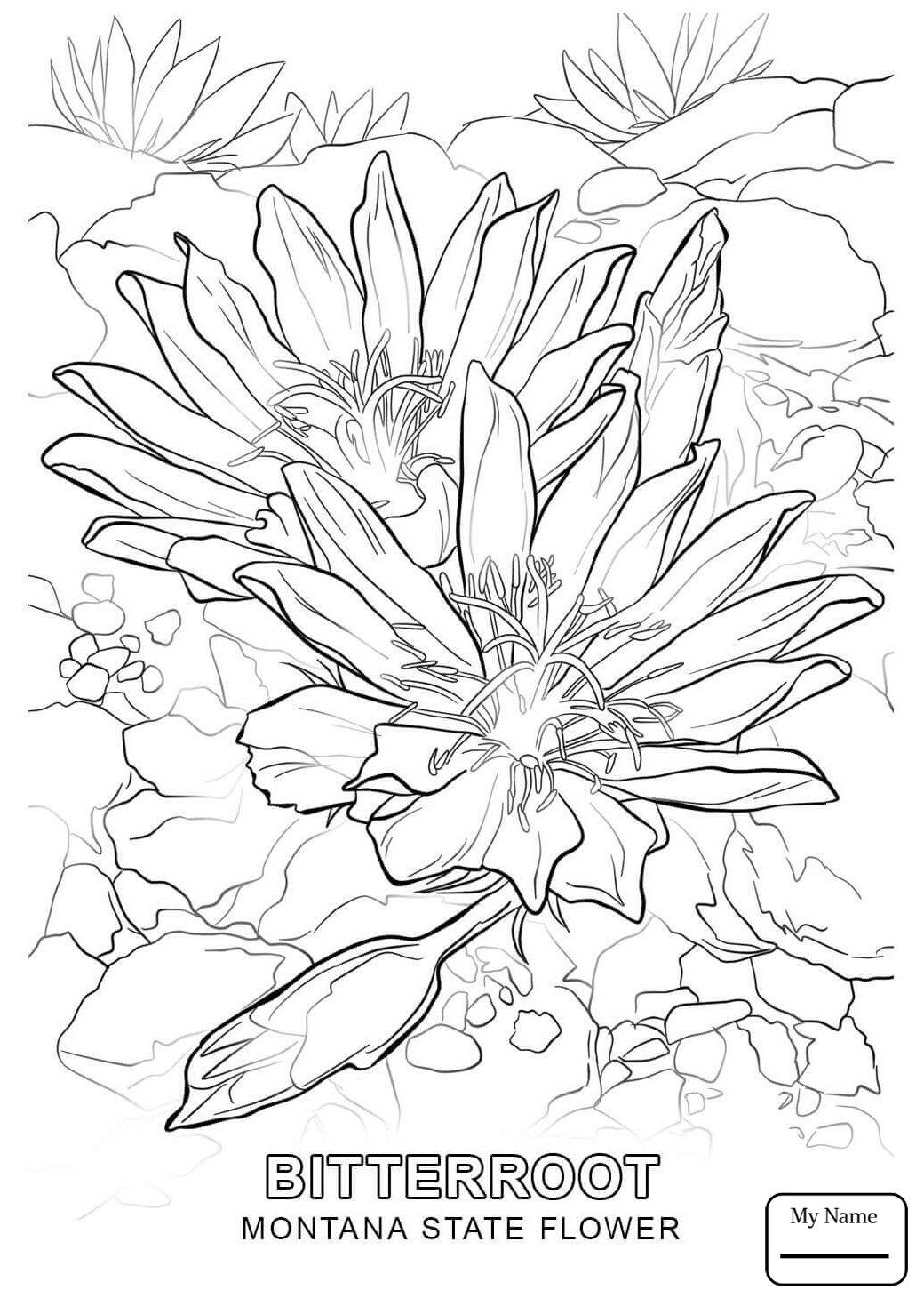 1040x1469 State Flower Coloring Pages