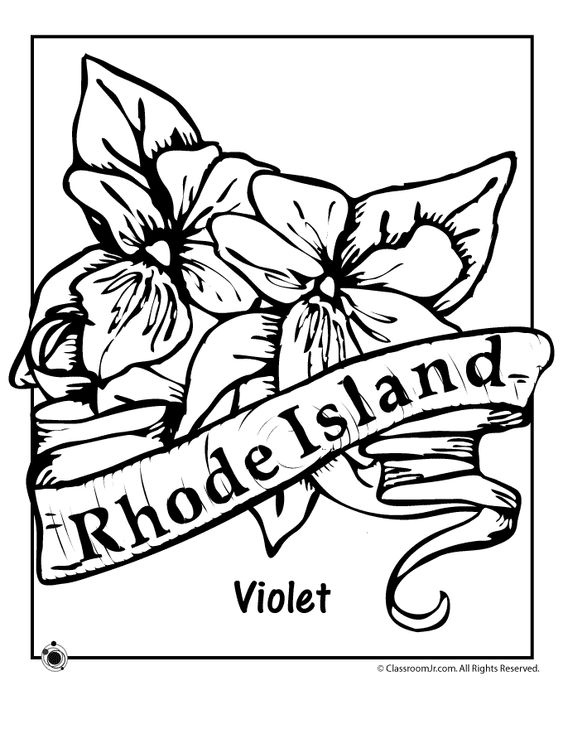 563x729 State Flower Coloring Pages Illinois State Flower Coloring Page