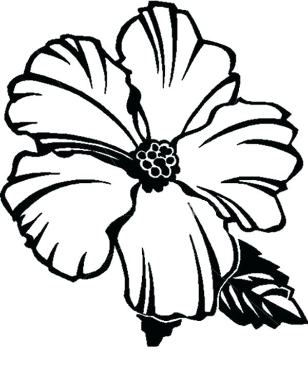 600x709 State Flower Printable Coloring Pages Picture Of Hibiscus Flower