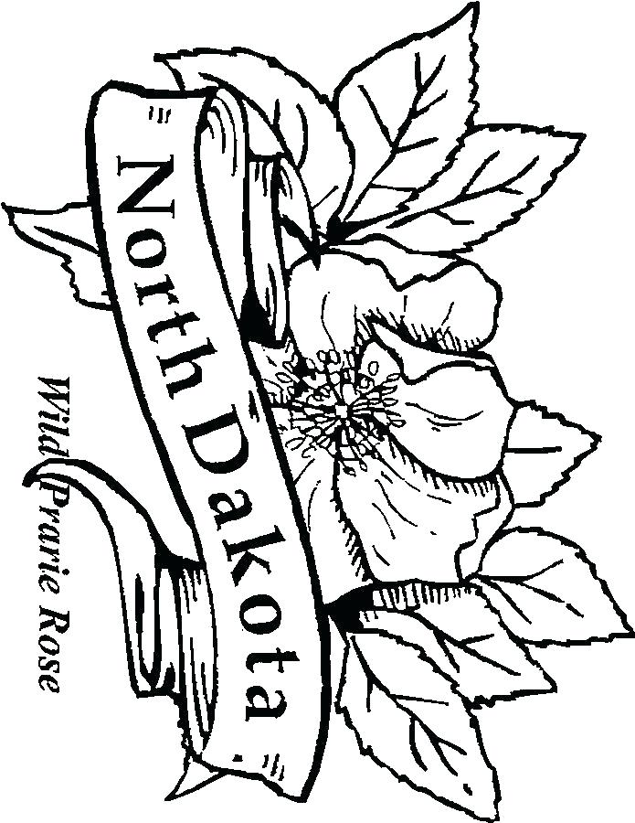 695x900 Arkansas Coloring Pages State Flower Coloring Pages Images