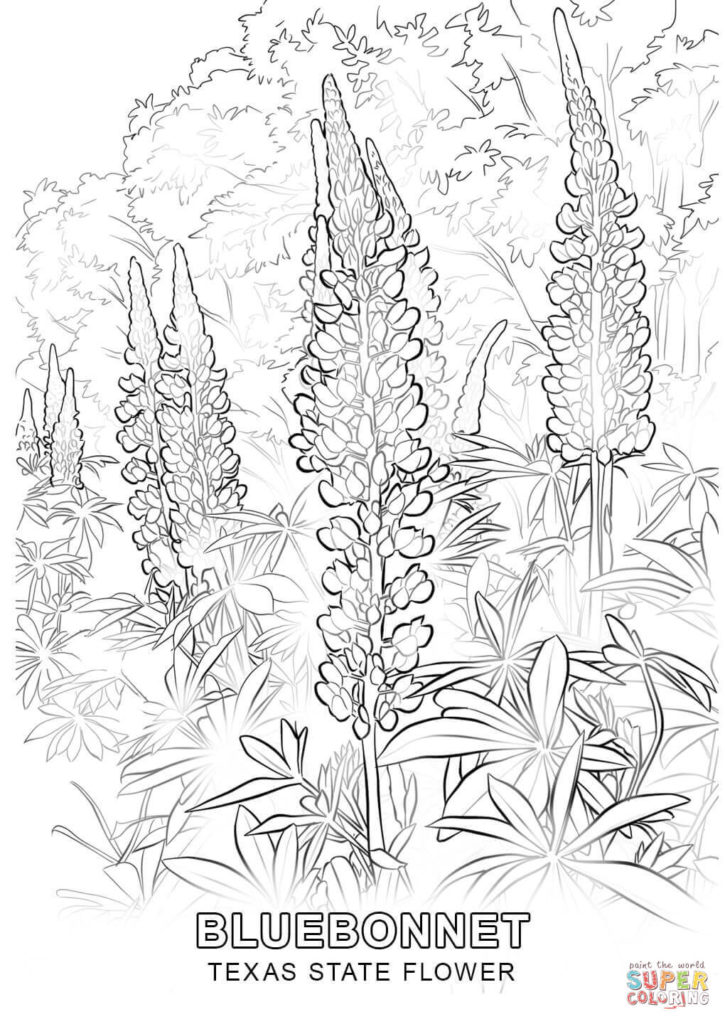 725x1024 Texas Color Pages State Flower Coloring Page Free Printable Get