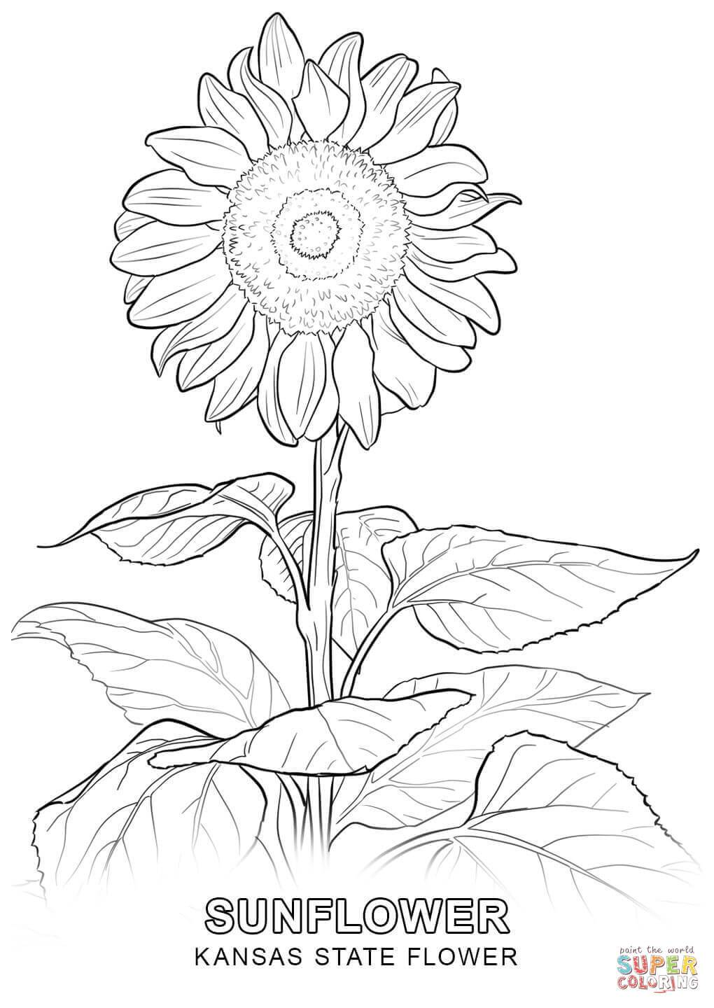 1020x1440 Unbelievable Kansas State Flower Coloring Page Printable