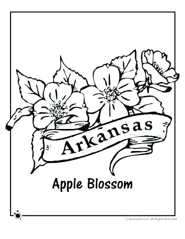 369x478 Arkansas Coloring Pages