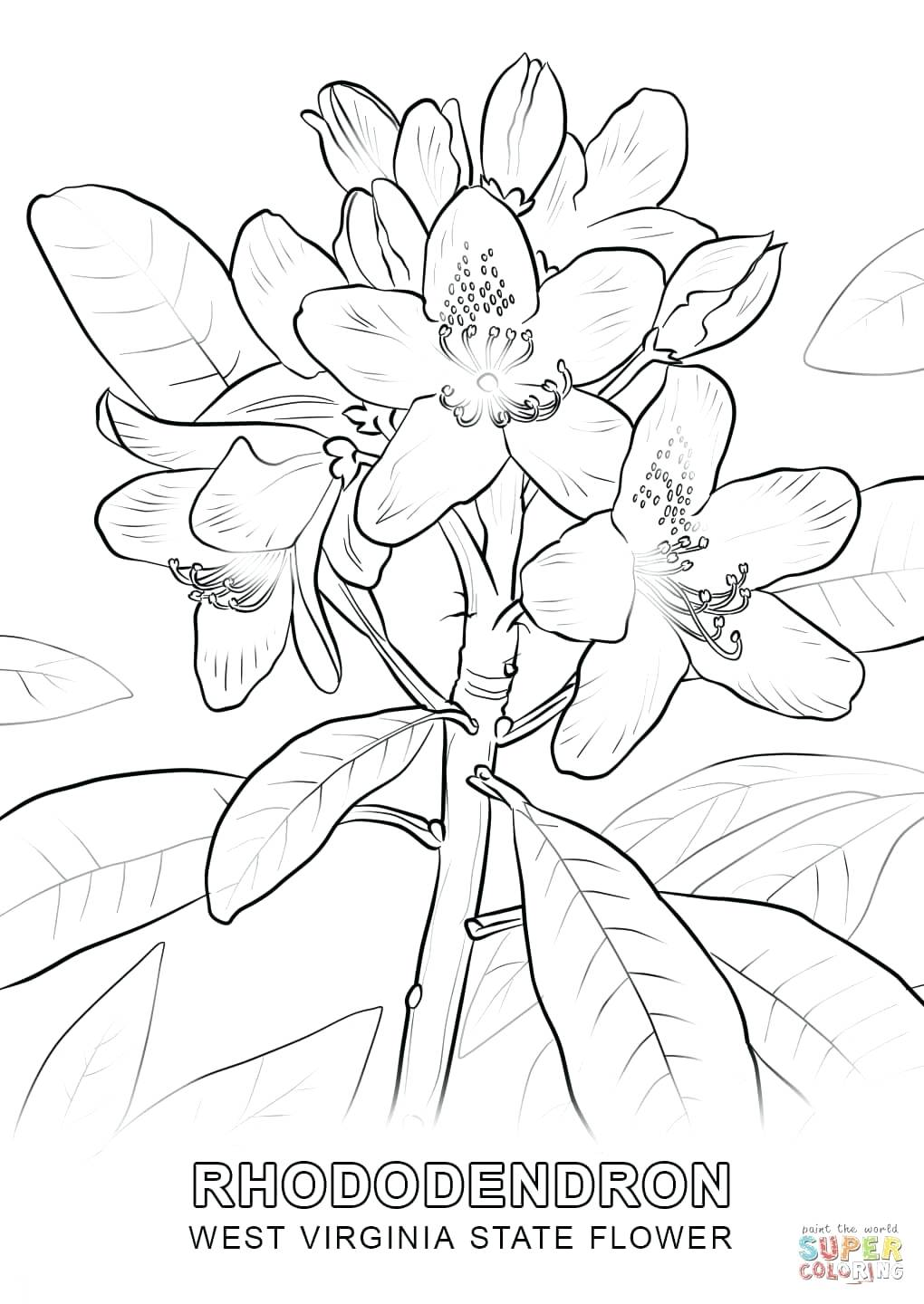 1020x1440 Coloring Pages Floral Coloring Pages Click The West State Flower