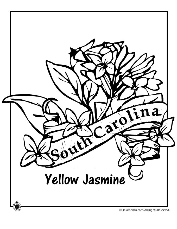680x880 Connecticut State Flower Coloring Page Best State Coloring