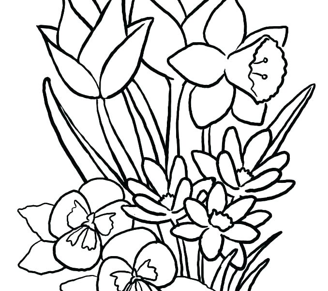 678x600 Free Flower Coloring Pages To Print