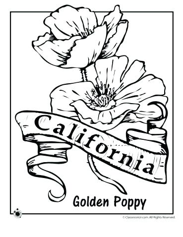 369x478 Flower Coloring Sheets As Cool State Flower Coloring Pages