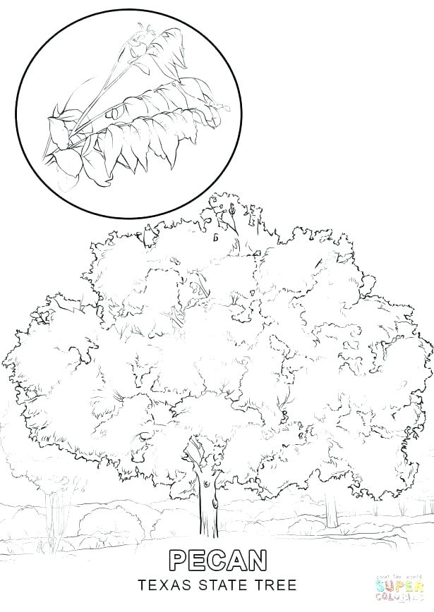 615x868 Coloring Pages Longhorn Steer Page Free Printable Coloring Pages
