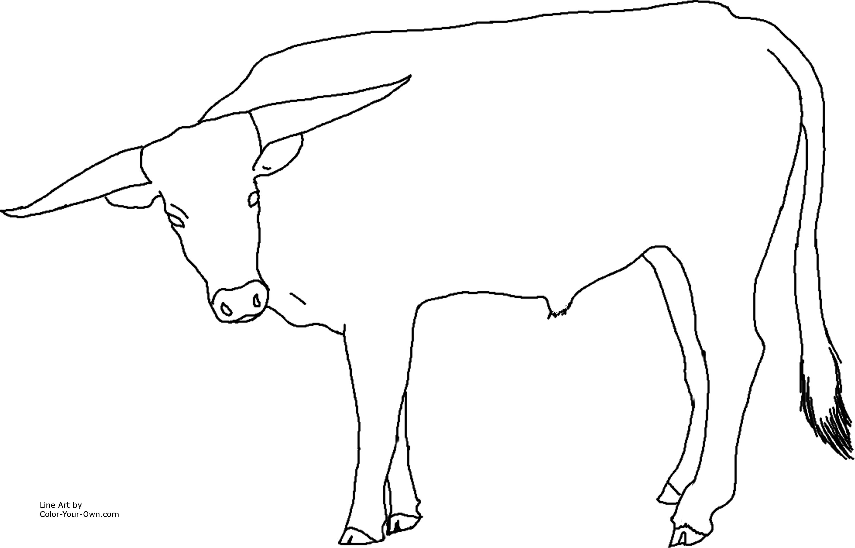 3000x1922 New Longhorn Coloring Pages Gallery Printable Coloring Sheet