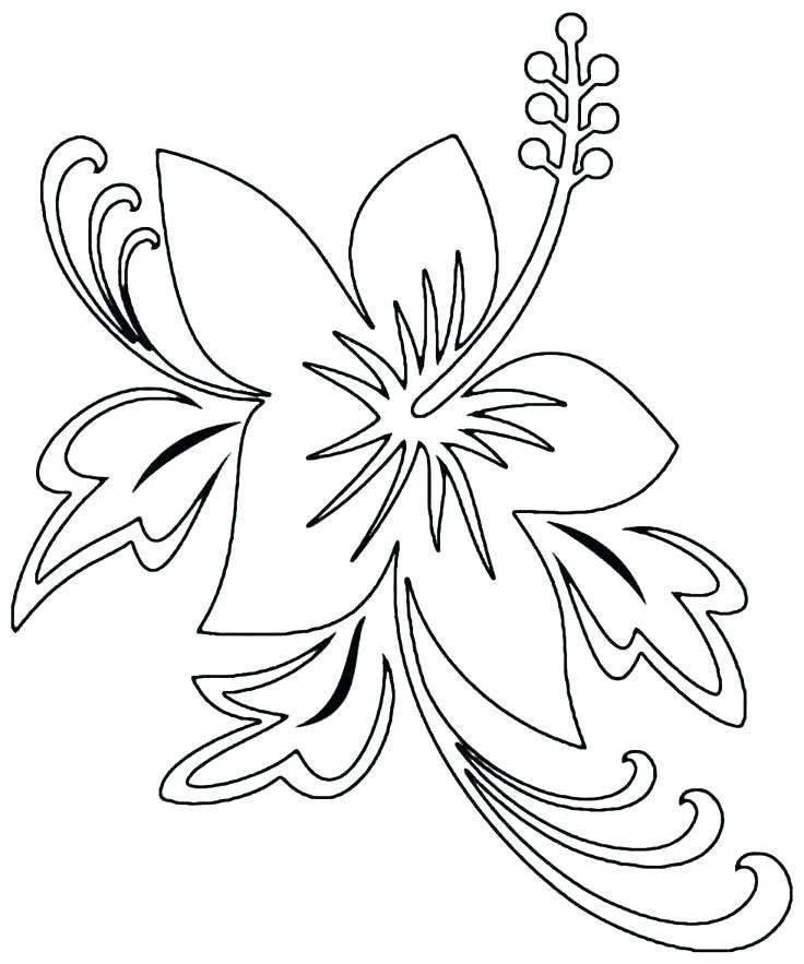 736x883 Flower Outline Printable Coloring Page Best Flower Template Ideas
