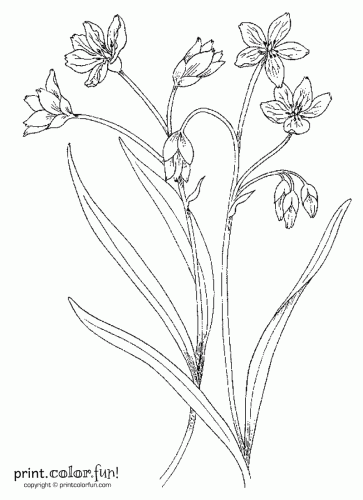 363x500 Flowers And Stems Coloring Page