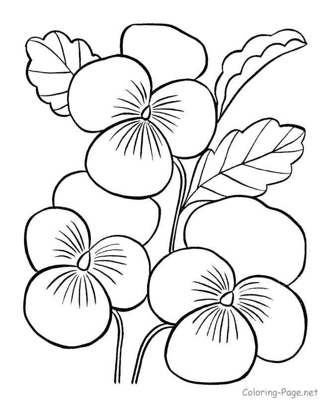 670x820 Outstanding Coloring Page Rose Outstanding Coloring Page Rose